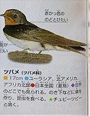 Barn Swallow ツバメ