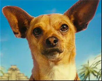 Papi (the Chihuahua)