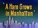 A Hare Grows in Manhattan