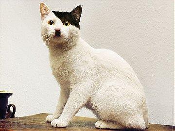 1- A Hitler Cat Look-Alike
