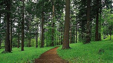 Forest Park (Portland Oregon)