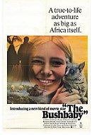 The Bushbaby (1969)