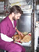 What is a Veterinary Assistant?