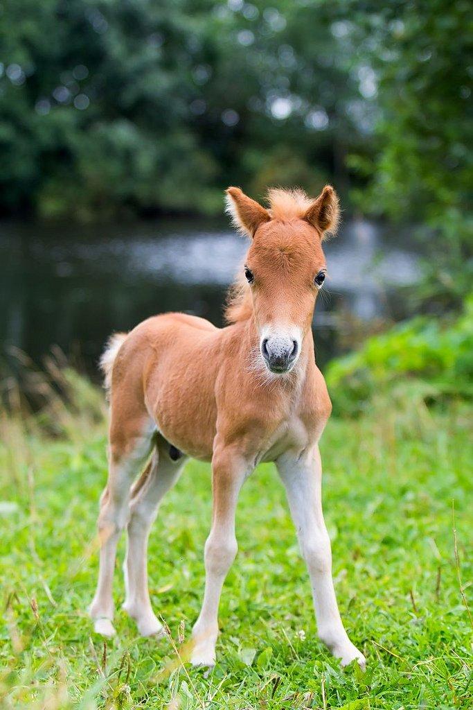 Cute Baby Horses List