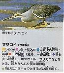 Striated Heron ササゴイ