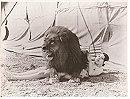 Circus Today